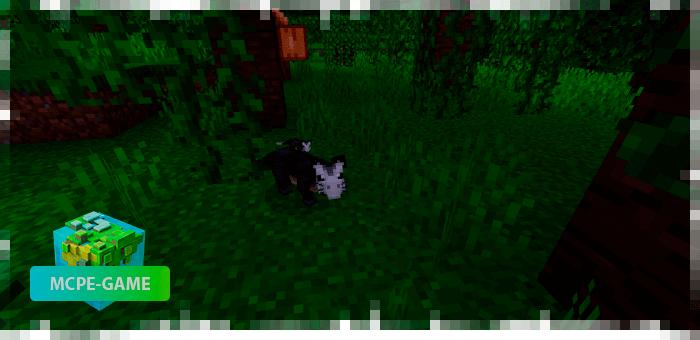 Big-eared possum