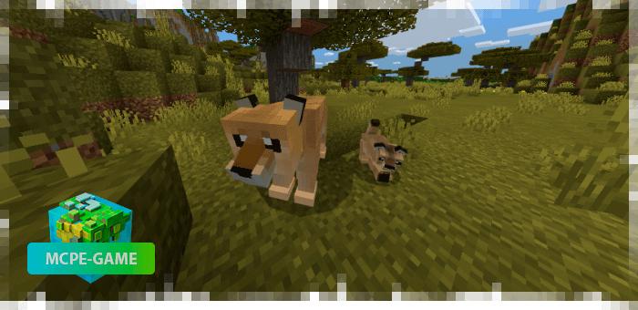 Львы — новые животные в Майнкрафт ПЕ