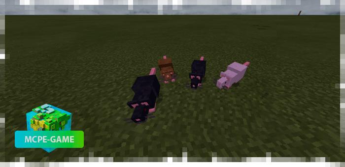 Крысы из мода на животных Mo'creatures