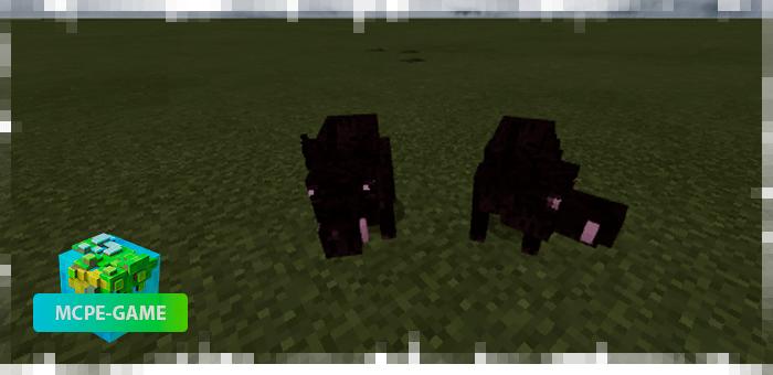 Кабаны из мода на животных Mo'creatures