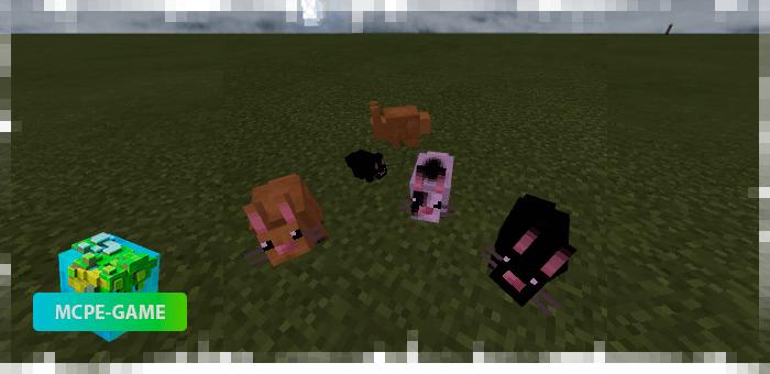 Кролики из мода на животных Mo'creatures