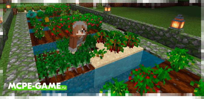 Выращивайте новые растения с модом Bum_Crops на Майнкрафт ПЕ