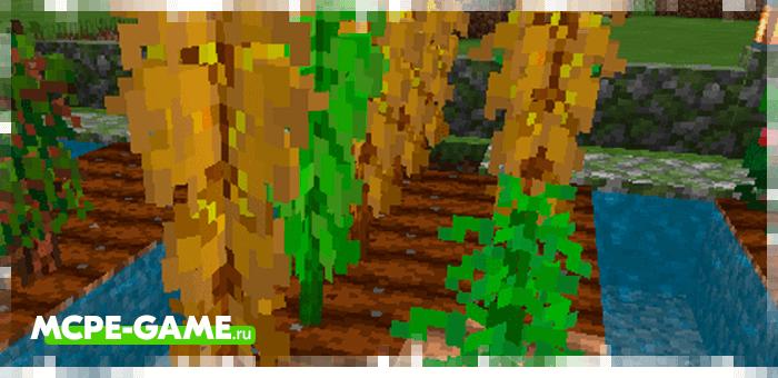 Кукуруза из мода Bum_Crops на Майнкрафт ПЕ