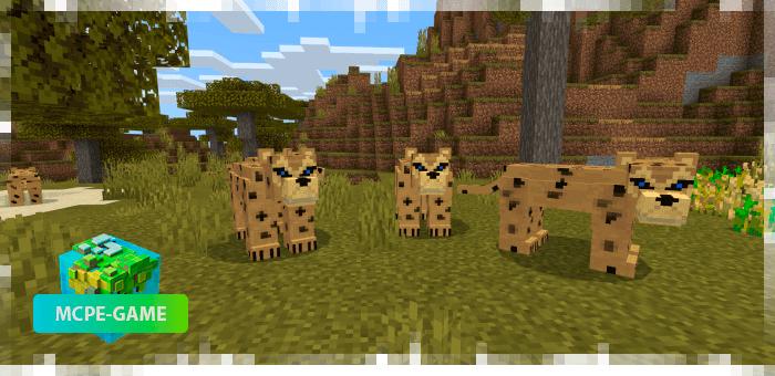 Леопарды из мода на животных World Animals