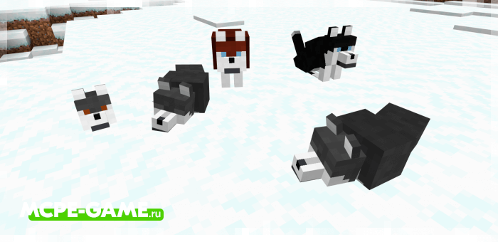 Хаски из мода Wolves+ для Minecraft